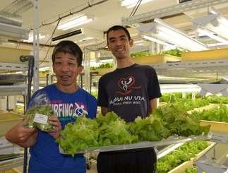 収穫したばかりの野菜を見せる(左から)西銘心さんと金城宗克さん=那覇市古波蔵・ドリームファームそてつの風