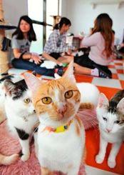 愛猫家が集う「猫の城Nyangusk」=22日午後、宜野湾市大山