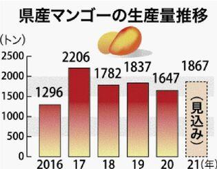 県産マンゴーの生産量推移