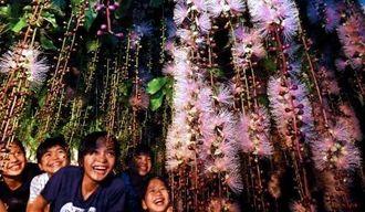 ライトアップされた庭先で甘い香りを漂わせて咲き誇るサガリバナ=12日午後9時ごろ、糸満市座波(渡辺奈々撮影)