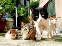 人はなぜ猫にメロメロになるのか? 沖縄で写真展を開く岩合光昭さんに聞きました