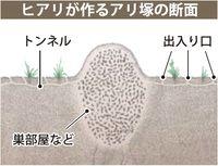 「もしやヒアリ?」 沖縄で情報相次ぐ 見分け困難、ドーム状のアリ塚に注意