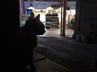 「良い横顔だろ」2016年、年末、桜坂散歩中