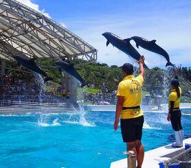華麗にジャンプを披露するミナミバンドウイルカとバンドウイルカ=2019年7月22日(国営沖縄記念公園・海洋博公園提供)