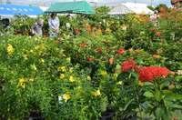 園芸ファン「朝一番で来ました」 沖縄市秋の大植木市始まる