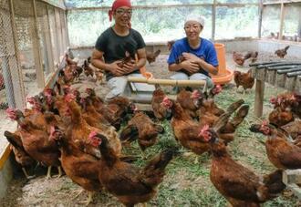 採卵用の新鶏「龍神コッコ」と養鶏家の夫婦=和歌山県田辺市