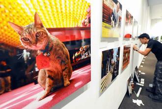 開幕に向け、展示作業を急ぐスタッフ=5日、浦添市美術館(古謝克公撮影)