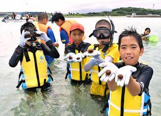 昨秋に高嶺小の児童と沖水高の生徒が人工授精したシラヒゲウニ=2日、糸満市名城沖