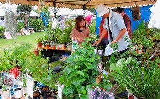 沖縄市若夏大植木市を楽しむ来場者=3日、沖縄市・農民研修センター
