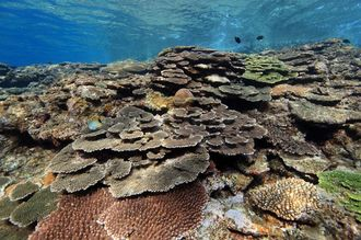 2013年12月、灯台下にて撮影。大型台風の影響で一度大きく被害を受けたのですが回復してきてるサンゴです。