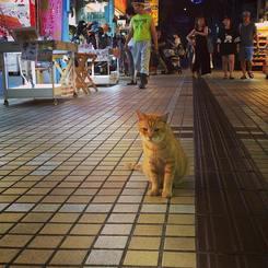 「平和通りのサクラ猫さん」2016年6月に夜の平和通りで出会ったサクラ猫さんです。観光客が行き交う中、微動だにせず佇んでいました。街の方々も優しく見守ってるんでしょうか。このままずーっと平和な街であって欲しいね♡