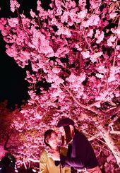 ライトアップされた桜並木
