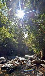 朝日が差し込む比地川流域の森。上流には比地大滝がある=国頭村