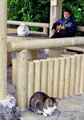 寒波の中、ギターの音色を聞いて気を紛らわせている? 猫たち=8日、市南ぬ浜町緑地公園