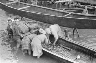 漁から戻った船から、魚を取る女性たち。もとの写真説明には「魚を買い取っていく」とあるが、海では現金のやりとりをしていなかったという証言がある。現在の糸満市糸満、前端区辺りと見られる