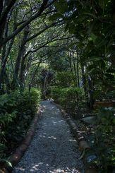 【自然公園のような津波古さんのお庭】