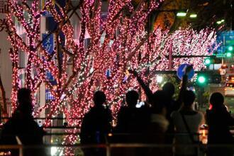 東京電力福島第1原発事故で町の一部が避難区域となっている福島県富岡町の桜の名所、夜の森の桜並木を再現したイルミネーション。ケヤキ並木に飾られた白やピンク色のLED電球が一斉に点灯すると、見物客から歓声が上がった=14日夕、福島県いわき市