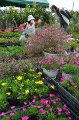 お目当ての花々を買い求める来場者=7日、沖縄市登川・市農民研修センター