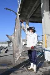 捕獲された体長2・26メートル、体重88キロのホウライザメ=24日、宜野座村・漢那漁港