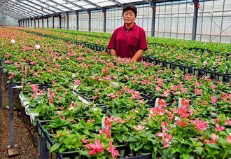 出荷を待つちゅらビンカと山口喜美子代表=沖縄市の幸和農園