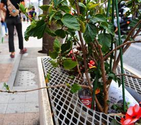 ペットボトルや紙くずが捨てられた国際通りのプランター。5月以降に撤去されることになった=那覇市松尾