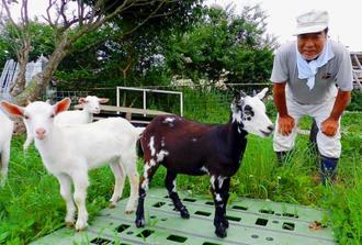 白黒ヤギと成長を見守る前田薫さん=石垣市大里の放牧地