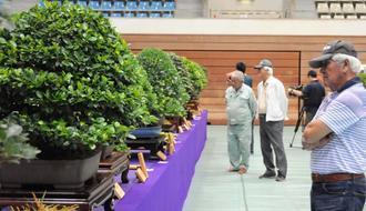 丹精込めて育てられた盆栽を鑑賞する来場者=17日、うるま市具志川総合体育館
