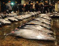 泊魚市場の荷さばき所移転 県漁連が準備室設置検討