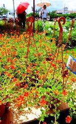 色鮮やかな植物が並ぶ会場=12日、沖縄市農民研修センター