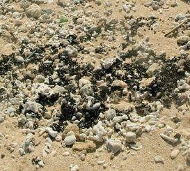 吉野海岸に漂着した廃油ボール=17日(宮古島海上保安部提供)