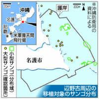 サンゴ移植を巡り対立 辺野古埋め立て工事で県と国