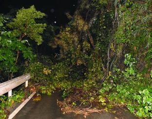 大雨の影響で木が倒れて道がふさがった林道=15日午後7時44分、国頭村宜名真