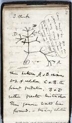 英ケンブリッジ大図書館で紛失したダーウィンのノートに描かれていた「生命の樹」と呼ばれるスケッチ(同図書館提供・英PA通信=共同)