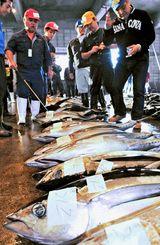 糸満漁業協同組合の初競りで、マグロを競り落とす仲買人=4日、糸満漁港北区セリ市場