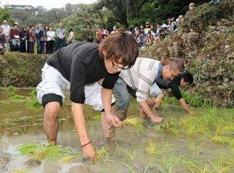 豊作と健康を願って稲を植える仲村渠区の青年ら=23日、南城市玉城百名(天久仁撮影)