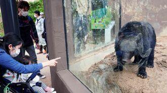 ツキノワグマを眺める親子連れ=23日、沖縄市・沖縄こどもの国