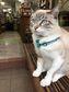 【前編】猫の日ってニャンだろう? 那覇の保護猫さんたちが教えてくれたこと
