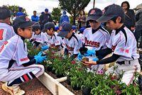 DeNA選手を花で迎える準備/宜野湾の学童チームら