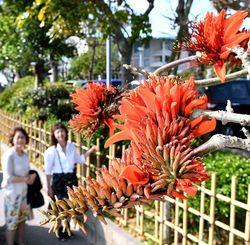 害虫による被害が広がっている沖縄の県花デイゴ