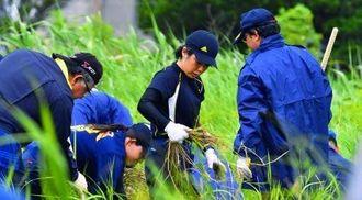 女性会社員が遺体で見つかった事件で、草むらを捜索する沖縄県警の警察官=30日午前、うるま市