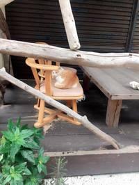 沖縄のネコ写真全応募作品 facebook編その3