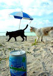 「青い海と、猫とビール」竹富島で海水浴をしているときに(2015年)
