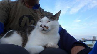「出会い」2016年11月、北谷海浜公園で散歩中に出会ったノラさん。初対面でいきなり膝の上で寝てしまいました。