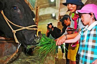 牛へのエサやりを楽しむ沖縄盲学校の子どもたち=10日、豊見城市の南部農林高校