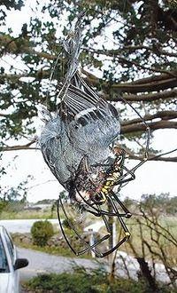 【閲覧注意】「信じられない」 クモが鳥を食った