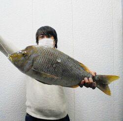 宜野座海岸で62センチ、3.18キロのタマンを釣った長野勇太さん=4日
