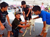 ヤギ汁は好き…でもかわいいな 沖縄・本部町ヤギ祭